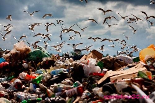 Вывоз мусора в серпуховском районефото637