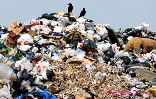 Вывоз мусора красносельскийфото19