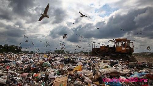 Вывоз мусора парк культурыфото1218