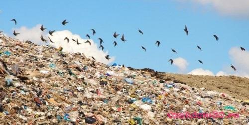 Вывоз мусора газель люберцыфото1555