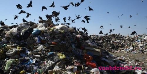 Аренда контейнер для мусора строительногофото809